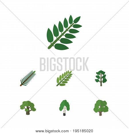 Flat Icon Nature Set Of Acacia Leaf, Timber, Tree And Other Vector Objects. Also Includes Spruce, Oak, Birch Elements.