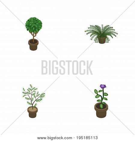 Isometric Houseplant Set Of Fern, Plant, Flower And Other Vector Objects. Also Includes Plant, Houseplant, Fern Elements.