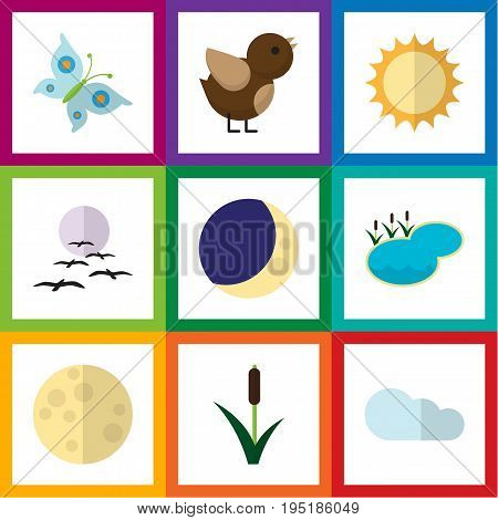 Flat Icon Bio Set Of Half Moon, Cattail, Solar And Other Vector Objects. Also Includes Bird, Sky, Lake Elements.