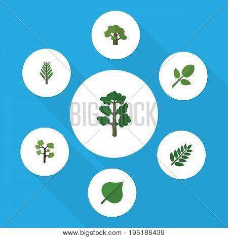 Flat Icon Bio Set Of Acacia Leaf, Jungle, Foliage And Other Vector Objects. Also Includes Leaves, Oak, Timber Elements.