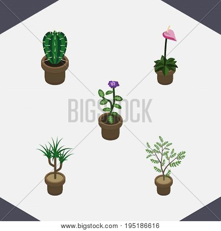 Isometric Houseplant Set Of Houseplant, Peyote, Flower And Other Vector Objects. Also Includes Botany, Peyote, Flowerpot Elements.
