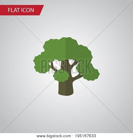Isolated Oak Flat Icon. Tree Vector Element Can Be Used For Oak, Tree, Forest Design Concept.