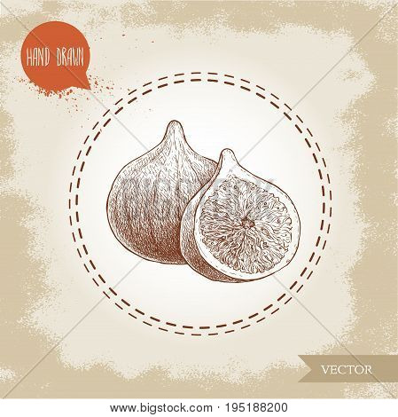 Hand drawn sketch figs. Vintage eco food drawing. Whole fruit and half of fig vector illustration.