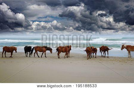 Corolla wild horses on the beach in North Carolina under dark clouds