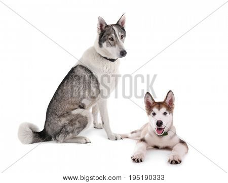 Dog and cute puppy on white background