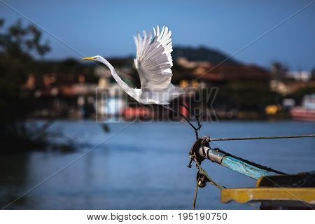 Great egret starting the flight from the bow of a boat.