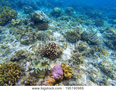 Underwater landscape with young coral reef. Diverse coral ecosystem. Blue sea water view. Wild nature tropical animal. Seabottom perspective. Natural aquarium in tropical lagoon. Exotic sea snorkeling