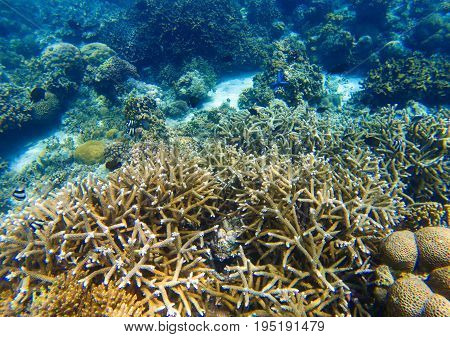 Underwater landscape with sharp coral reef. Diverse coral ecosystem. Blue sea water view. Tropical fish in nature. Sea bottom perspective. Natural aquarium in tropical lagoon. Exotic sea snorkeling