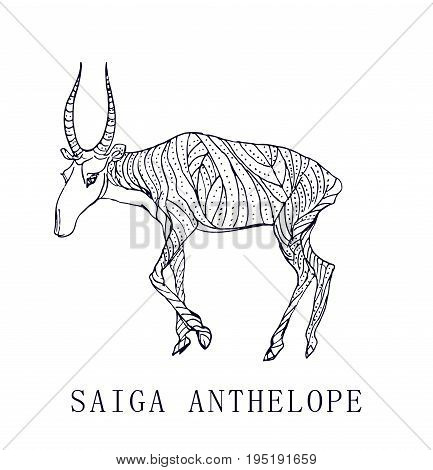 Saiga antelope.Rare animal, conservation status.Doodle illustration and logo