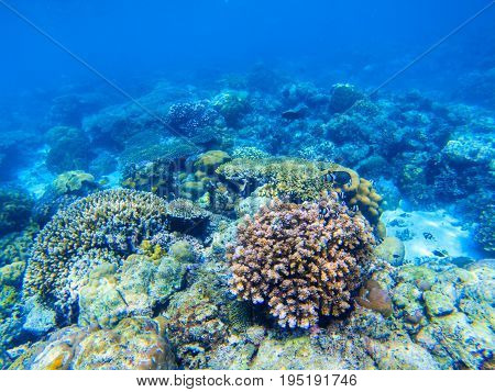 Coral reef undersea landscape. Diverse coral shapes. Coral fish in reef. Colorful tropical fishes in wild nature. Sea bottom with coral ecosystem. Tropic seashore snorkeling. Underwater background