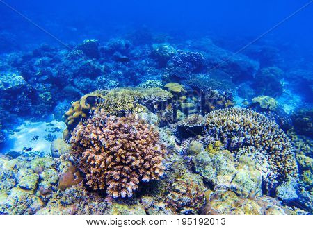 Coral reef underwater landscape. Diverse coral shapes. Coral fish in reef. Colorful tropical fishes in wild nature. Sea bottom with coral ecosystem. Tropic seashore snorkeling. Undersea background