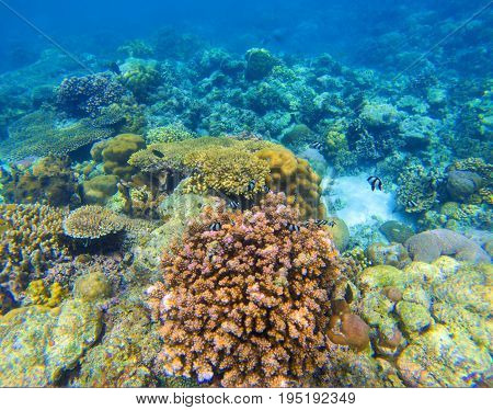 Coral reef underwater background. Diverse coral shapes. Coral fish in reef. Colorful tropical fishes in wild nature. Sea bottom with coral ecosystem. Tropic seashore snorkeling. Undersea landscape