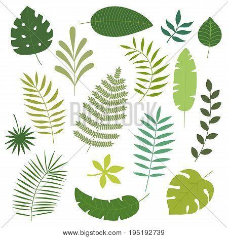 Vector set of tropical leaves. Palm leaf, banana leaf. Jungle trees.Botanical floral illustration
