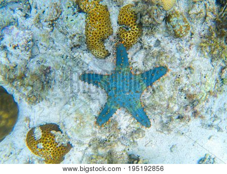 Starfish on sea bottom. Underwater landscape with star fish. Tropical fish in wild nature. Sea bottom perspective. Natural aquarium in tropical lagoon. Exotic sea snorkeling. Blue and orange starfish