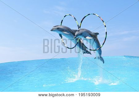 Jump The Two Large Bottlenose Dolphins Bottlenose Dolphin (lat. Tursiops Truncatus) Through The Hoop