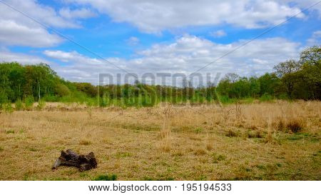 Single laying down tree trunk on one of Wimbledon Common meadow, England