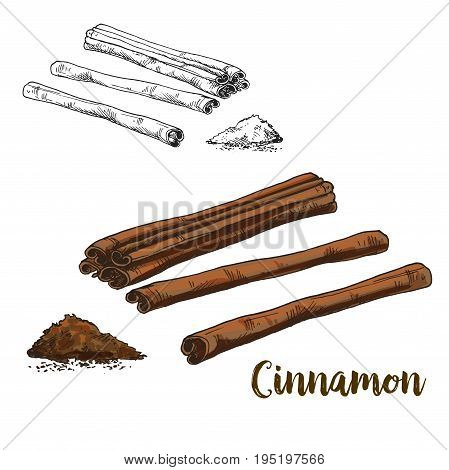 Full color realistic sketch illustration of cinnamon, vector illustration