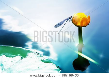 A blue dragonfly on a yellow water lily against the background of a watery surface. Artistic image. Selective focus.