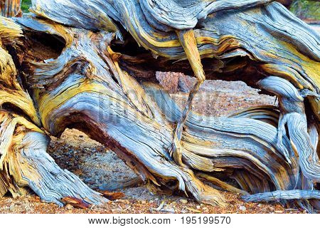 Abstract background of twisting pine wood textures with patterns