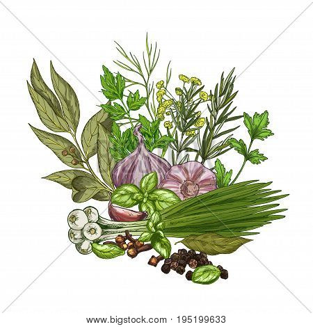 Heap of culinary herbs and spices, full color vector illustration