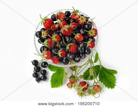 Pine Strawberry And Black Currant In A Glass On A White Background.  With Bunch Currant And Leaves O