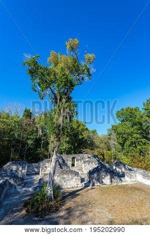Mayan Ruins And Trees