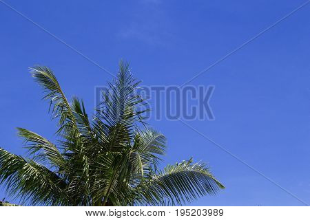 Green palm leaf on blue sky background. Tropical summer sky. Tropic island nature photo. Exotic vacation banner template with place for text. Coco palm leaves under sunlight. Relaxing summer skyscape