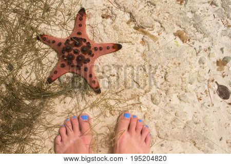 Red starfish and woman feet in sea water. Seaside with white sand. Sea sand top view with female feet. Girl feet with blue pedicure. Summer travel background. White beach banner. Sexy feet on sand