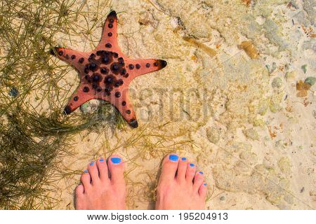 Red starfish and woman in sea water. Seaside with white sand. Sea sand top view with female feet. Girl feet on white beach. Summer travel background. Seaside vacation banner template with text place