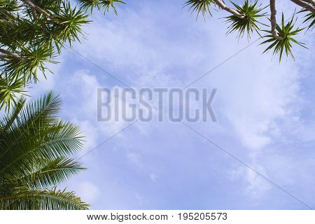 Coco palm leaf on sky background. Sunny day on tropical island. Summer holiday banner template. Fluffy palm tree crown with green leaves. Coconut palms under sunlight. Exotic nature relaxing view