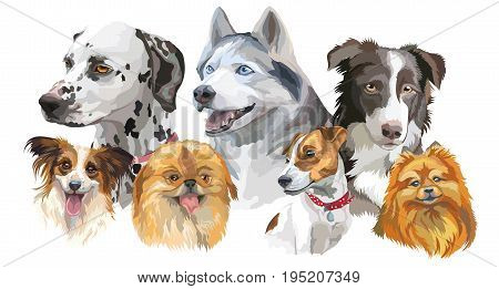 Set of colorful vector portraits of dog breeds (siberian husky border-collie; Dalmatian jack Russel terrier papillon small pomeranianPekingese) isolated on white background