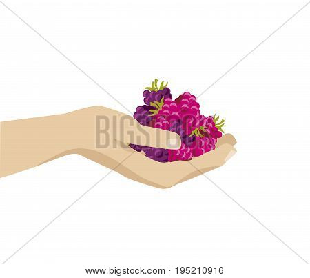 berries vector illustration. raspberry in human hand image. abstract decorative vintage element.