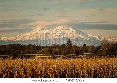 Majestic Mountains Behind Corn Field