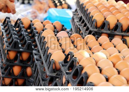 Eggs in the panel at the market