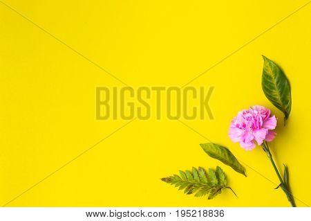 flat lay flowers branches leaves on pastel background