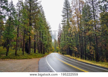 Road into a forrest at Yosemite National Park