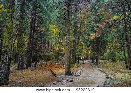 Hikers Walk Into The Forrest