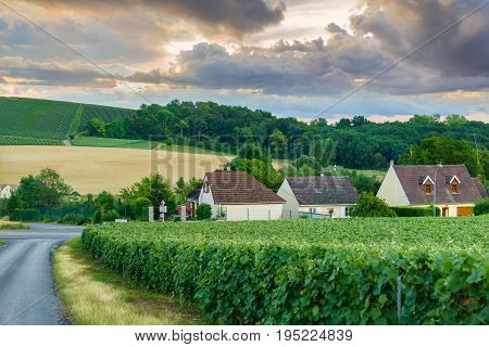Village countryside and champagne vineyards in sunset time at montagne de reims France