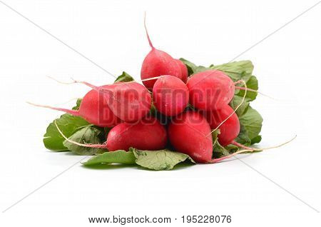beautiful radish on a white background isolated