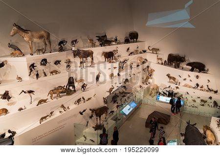Melbourne, Australia - April 30, 2017: Melbourne Museum is a historical and natural history museum in Carlton, including a wide collection of stuffed animals.