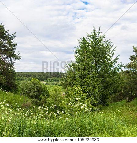 Summer Landscape In The Floodplain Of The River Vetluga.