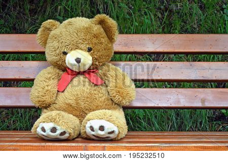 teddy bear alone on a bank and the rain come