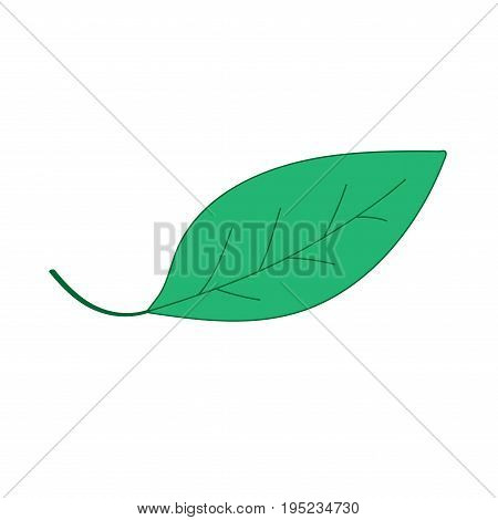 Leaf sign. Green plane icon isolated on white background. Color nature logo. Botany wood or garden symbol. Ecology flat silhouette. Foliage mark. Stock vector illustration