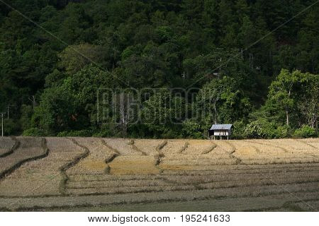 Traditional farmer Hut in a terrace rice field near forest with dramatic sun light shining on, Chiangmai, Thailand.