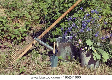 Metal watering can scapula and rake with lorga bucket in summer outside / garden still life