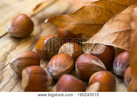 Scattered whole hazelnuts on weathered wood background dry autumn brown leaves fall mood cozy inspirational copy space