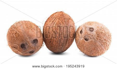 Three whole, big, fresh, organic tropical fruits of coconuts, isolated on a white background. An exotic and delicious coconuts. Fresh and nutritious coconuts.