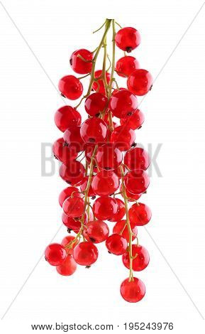 Mature and healthy red currant, isolated on a white background. Tasty, raw and ripe currant. Nutritious vegan breakfast.  Juicy, raw, fresh, tasty, healthy, nutritious concept.