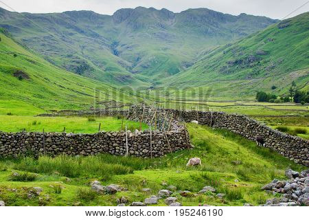 Beautiful views in Lake District National Park, England, stone walls, stream, mountains on the background, sheep in the fields, selective focus