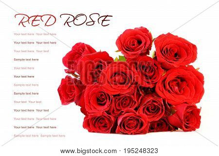 Red roses bouquet on white background with sample text.